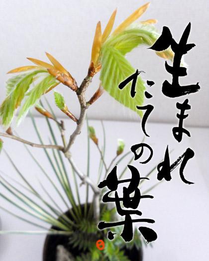 yose1.jpg